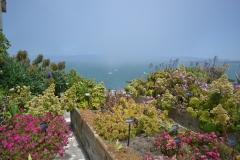 Alcatraz kwiaty 3