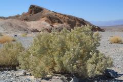 Dolina Śmierci - rośliny
