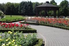 róże Inowrocław 2