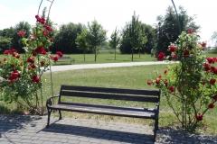 róże i ławka Inowrocław 4