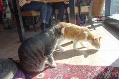 Koty w słońcu