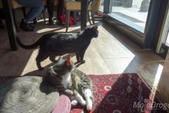 Koty w słońcu 2