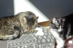Koty w słońcu 3