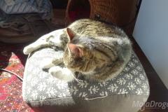 Kot w słońcu 3