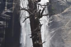 Park Narodowy Yosemite - wodospad 2
