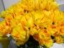 Tulipany na Wilanowie