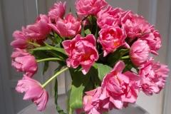 Różowe tulipany 2