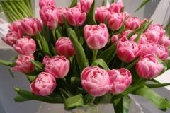 Różowe tulipany 3
