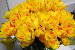 Żółte tulipany 2