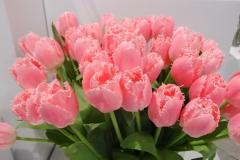 Różowe tulipany 4