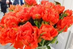 Czerwone tulipany 2