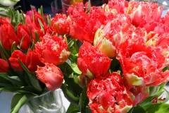 Czerwone tulipany 3