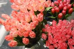 Różowe tulipany 6