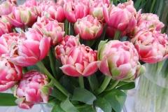 Różowe tulipany 7